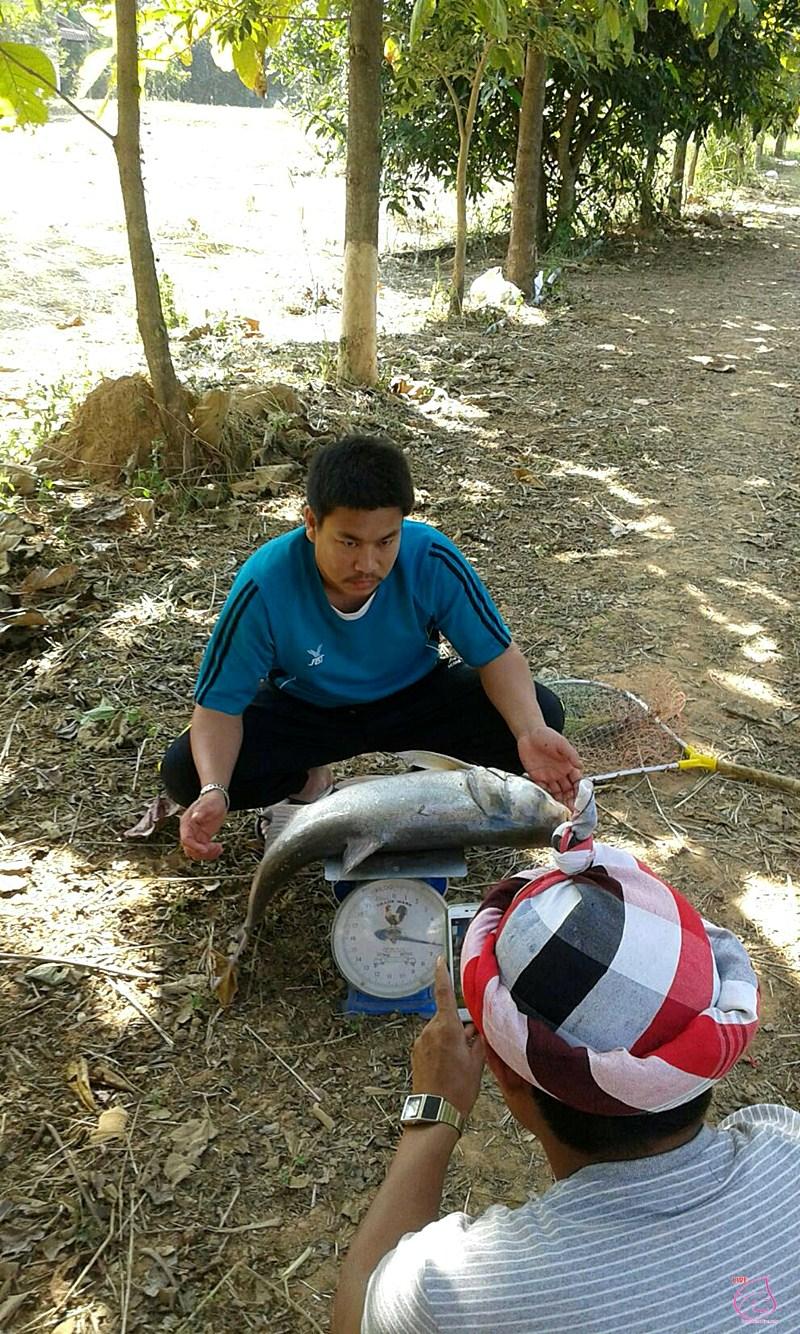 fish6016